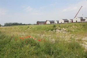 Klaprozen op het terrein van De Haas in Bergschenhoek