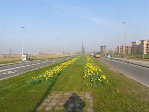 Boterdorpseweg in volle glorie 002