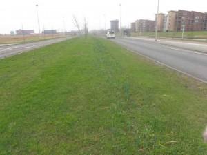Prille narcissen op de Boterdorpseweg