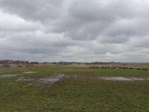 Groenzoom koeien op Wilderszijde