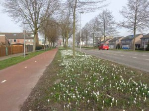 Berkelseweg in het voorjaar