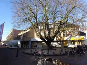 De boom blijft op de kop van Rondom en Hoeksekade in Bergschenhoek