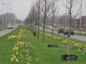 Lansingerland kent een zacht klimaat. Het voorjaar is nooit ver weg.