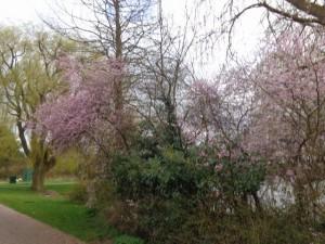 Voorjaar in Berkel