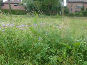 Bijen idylle in Offenbachplantsoen Berkel moet nog even geduld hebben!
